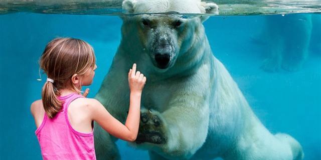Ours Polairec© Zoo De La Fleche (large)