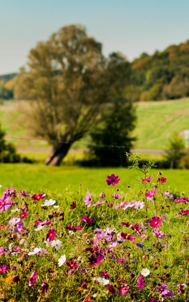 Prairies en Vallée du Loir (Dissay)