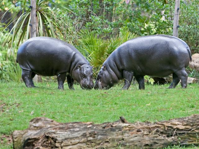 Zoo La Fleche Credit S Cordier (27) (large)