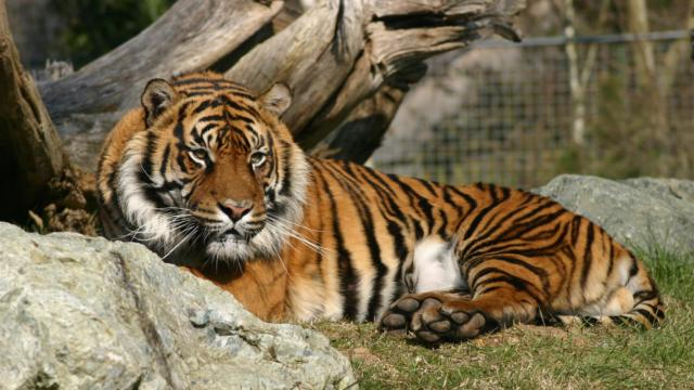Zoo La Fleche Credit S Cordier