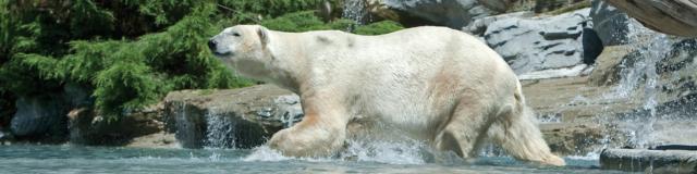 Zoo La Fleche Credit S Cordier (large)
