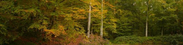 Forêt De Bercé