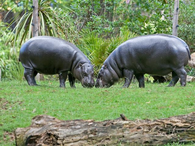 Zoo La Flèche (2)