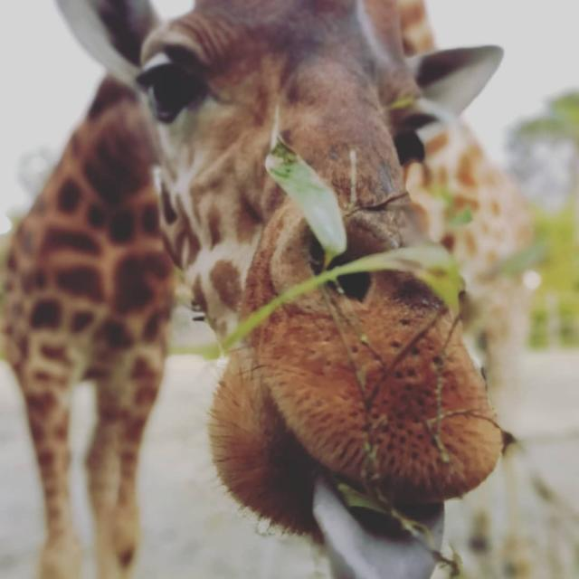 Instagram #zoodelafleche